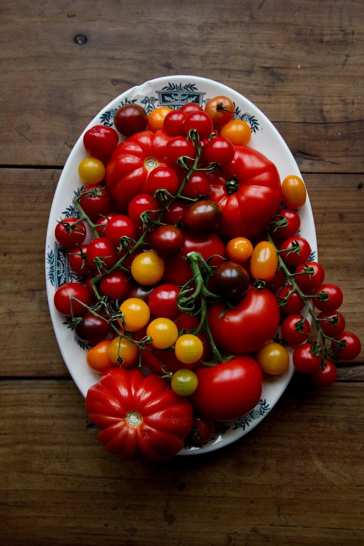 01_NOMNOM_Tomaten-Tarte.jpg