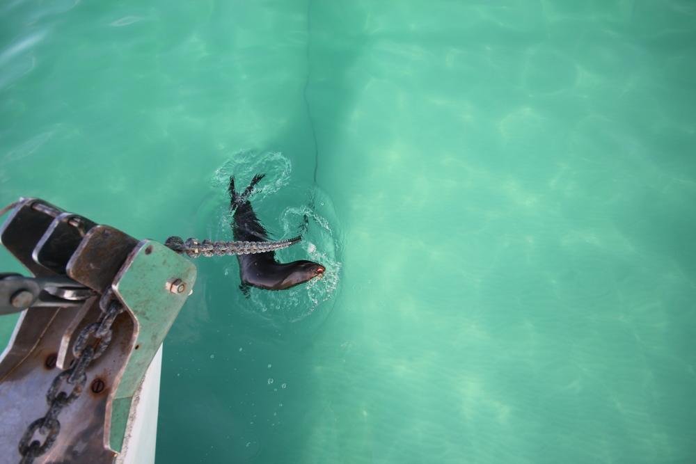 sealSwim1.JPG