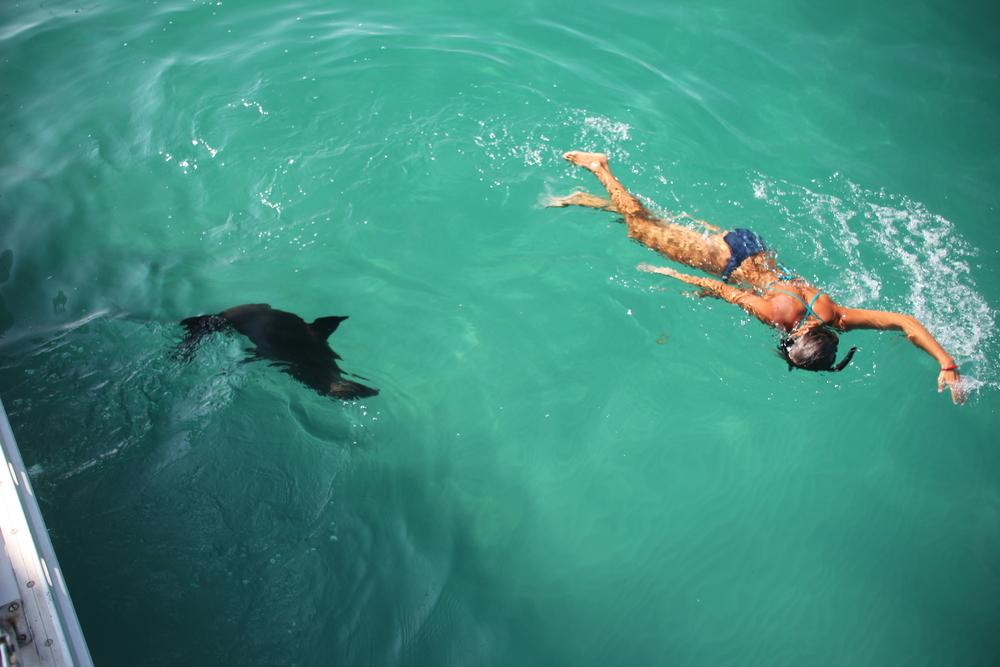 sealSwim2.JPG