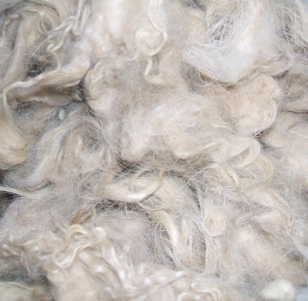 p wool.jpg