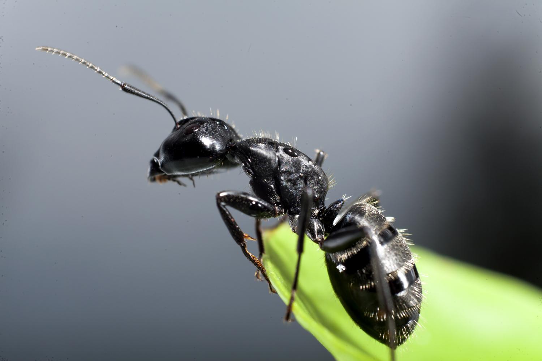 Cal-Cam Termite & Pest Control, Inc.