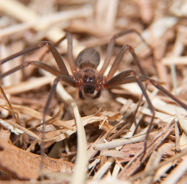 "Spiders<a href=""/spiders"">→</a><strong>Class Arachnida</strong>"