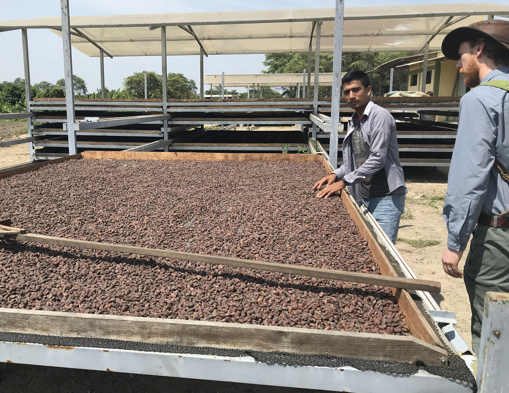 CACAO Drying.jpg