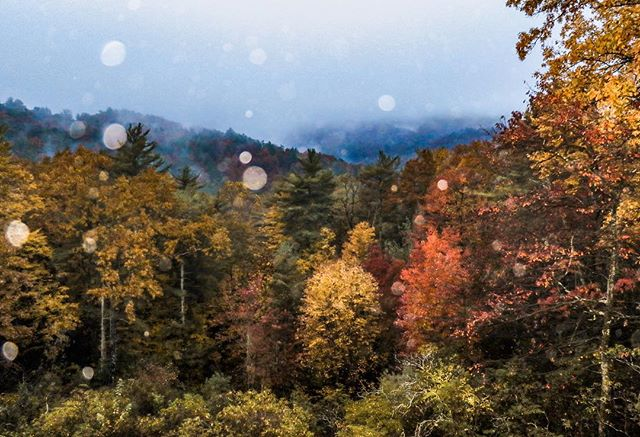 A fall scenic of the Blue Ridge Mountains that will entice you to find a wood fireplace and curl up with someone you love!🔥. #fallglory #fallphotoshoot #blueridgemountains #outdoorphotography #treesofinstagram #naturephotography #naturelovers ##outdooradventurephotos