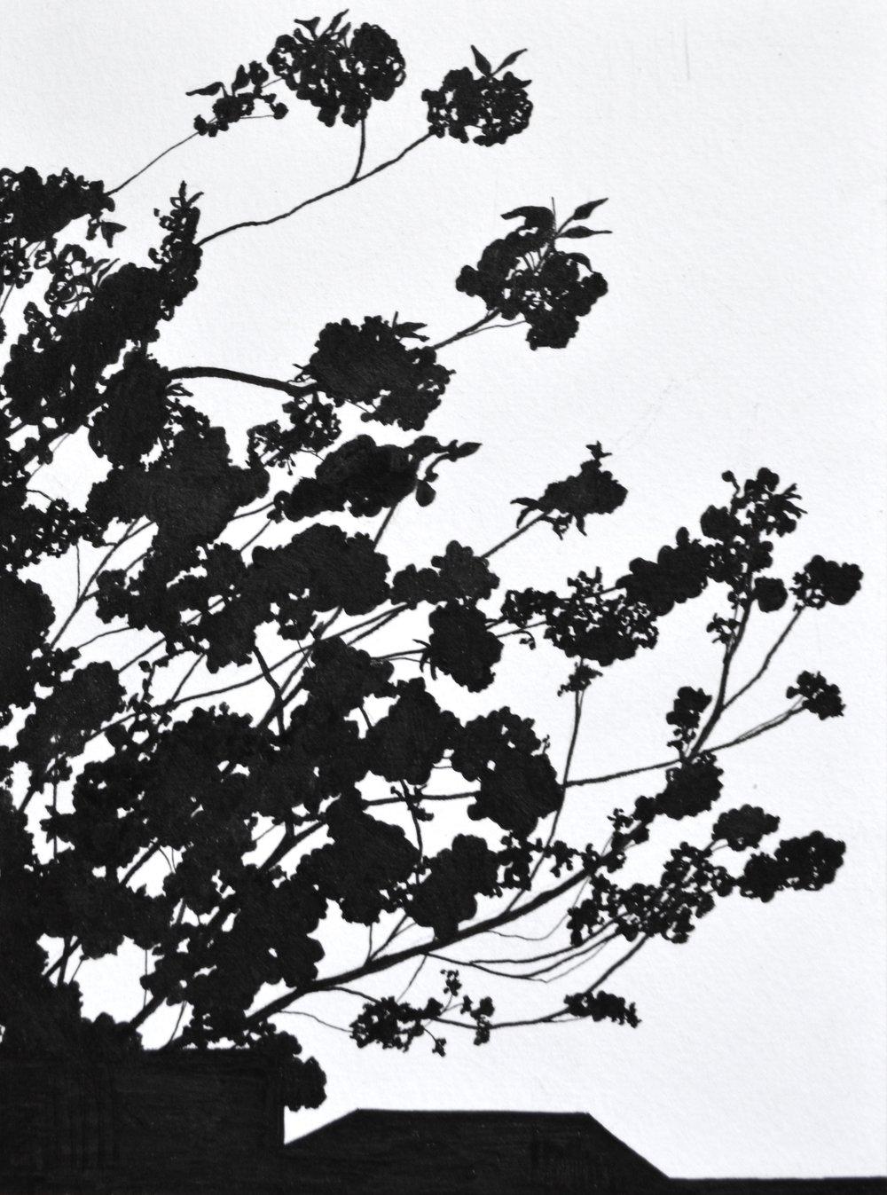 "In Bloom , Ink Pen on Paper, 6 x 8"", 2018"