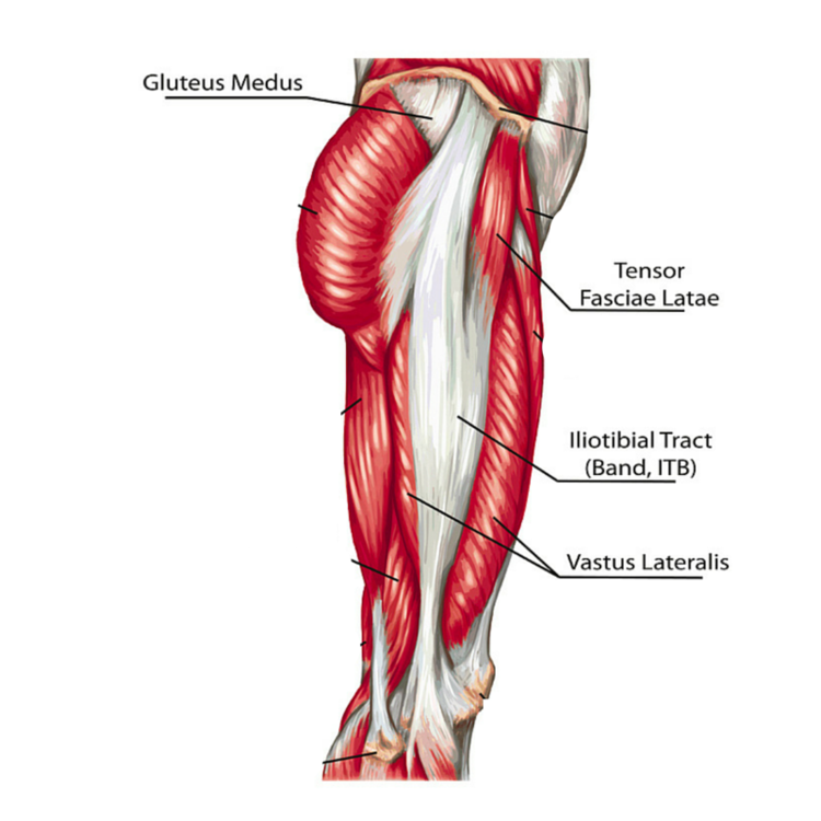 Lateral Leg Pain More Than Just The It Band Revo Physiotherapy