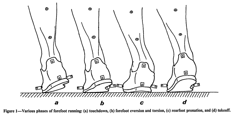 SOURCE: Stacoff A, Kalen X and Stussi E. The effects of shoes on the torsion and rearfoot motion in running. Med Sci Sports Exer, 1991; 23(4):482-490.
