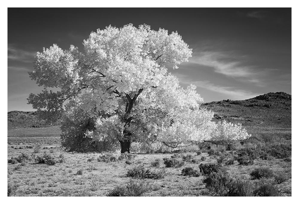 white_tree.jpg