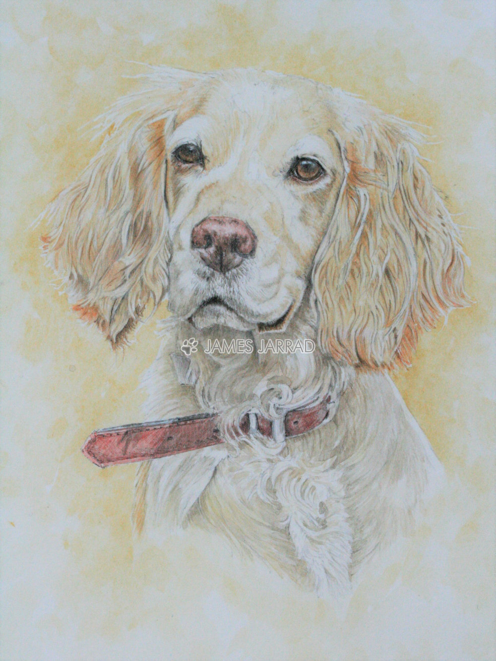 Tilly a coloured sketch.jpg