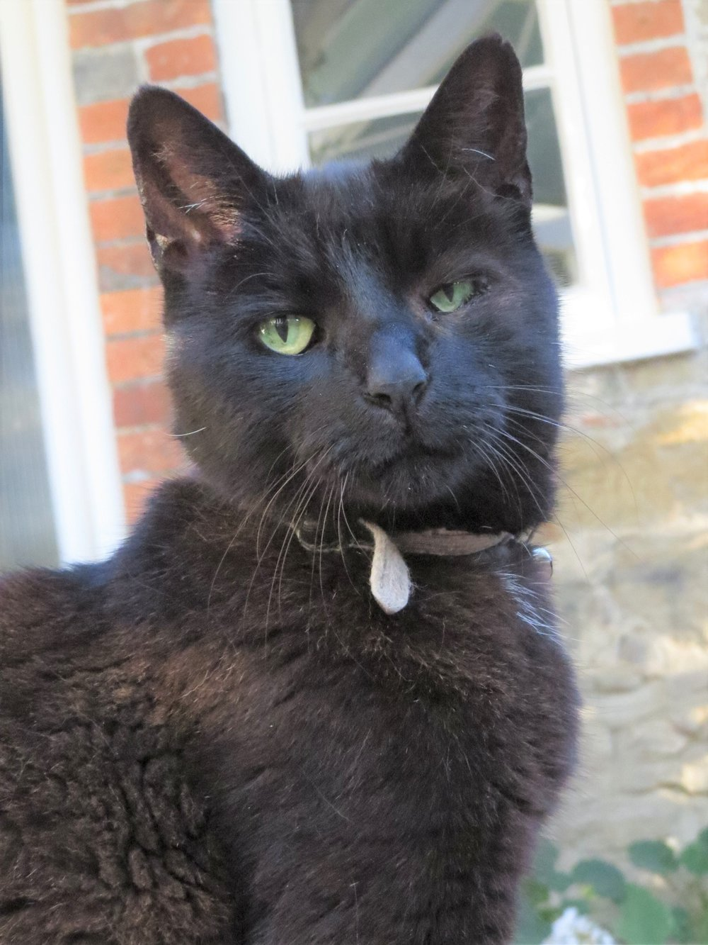 'Black Cat' ref.JPG