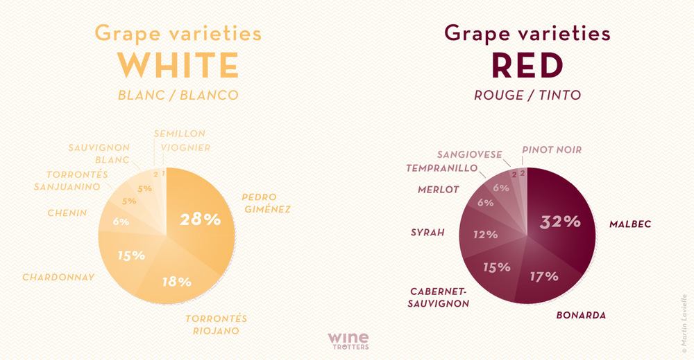 wine-TROTTERS_oenotourisme_wine-tourism-graphic-diagram-vino-grape-varieties-Argentina_01_1200