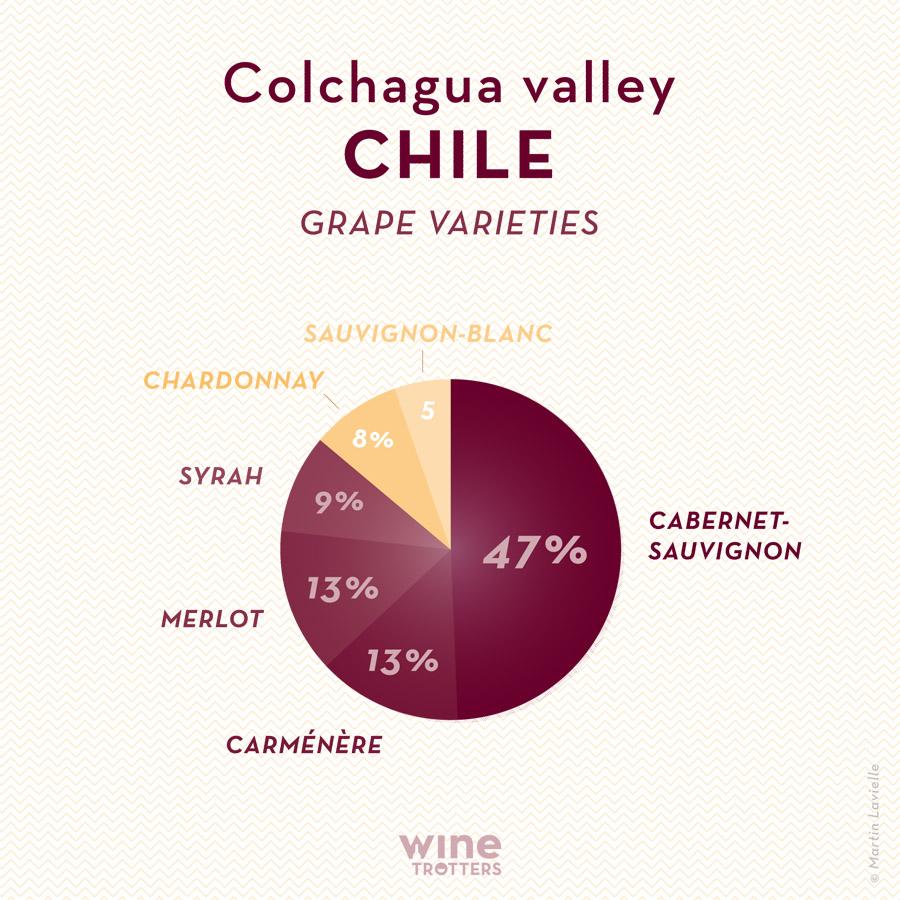 wine-TROTTERS_oenotourisme_wine-tourism-graphic-diagram-vino-grape-varieties_Chili-Chile-Colchagua_01