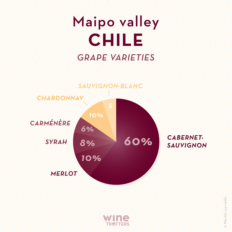 wine-TROTTERS_oenotourisme_wine-tourism-graphic-diagram-vino-grape-varieties_Chili-Chile-Maipo_01