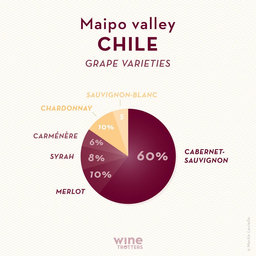 wine-TROTTERS_oenotourisme_wine-tourism-graphic-diagram-vino-grape-varieties_Chili-Chile-Maipo_01