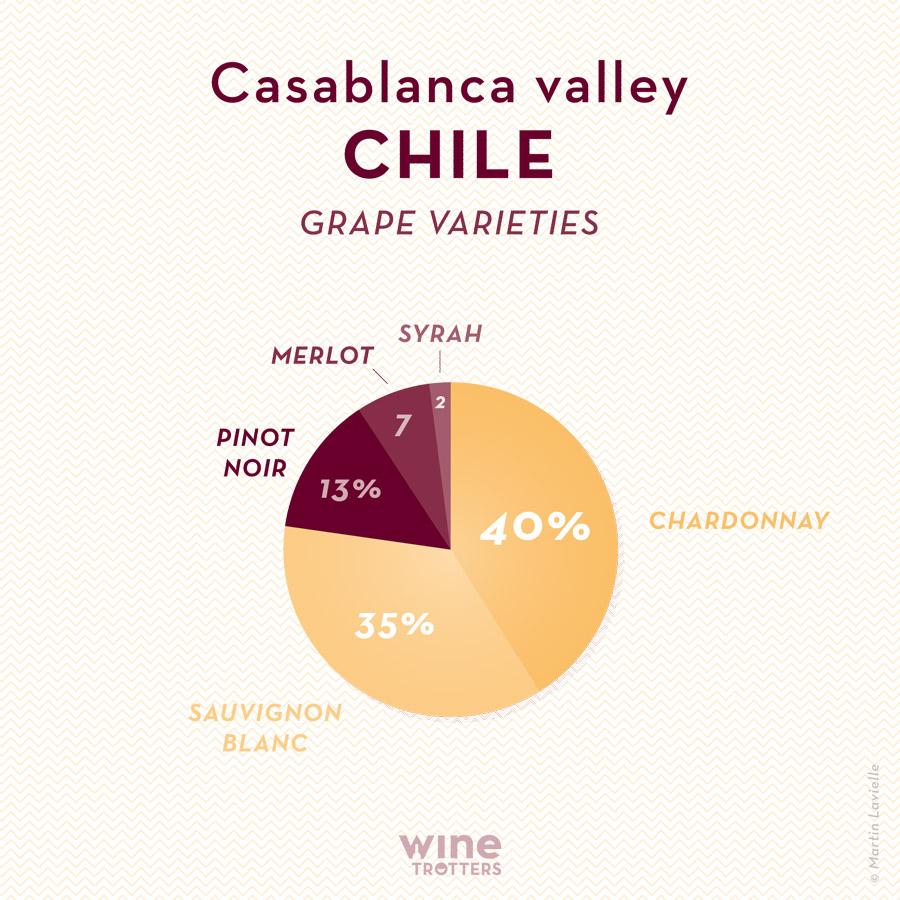 wine-TROTTERS_oenotourisme_wine-tourism-graphic-diagram-vino-grape-varieties_Chili-Chile-Casablanca_01
