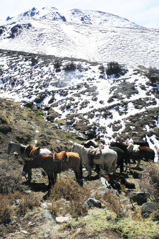wine-TROTTERS_oenotourisme_wine-tourism-agency_tour_vino_vin_turismo_ARGENTINA_Mendoza_trekking_hiking_horseback-riding_alta-montana_Andes_90_WEB-2000px.jpg