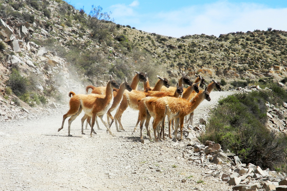 wine-TROTTERS_oenotourisme_wine-tourism-agency_tour_vino_vin_turismo_ARGENTINA_Mendoza_trekking_hiking_horseback-riding_alta-montana_Andes_25_WEB-2000px.jpg