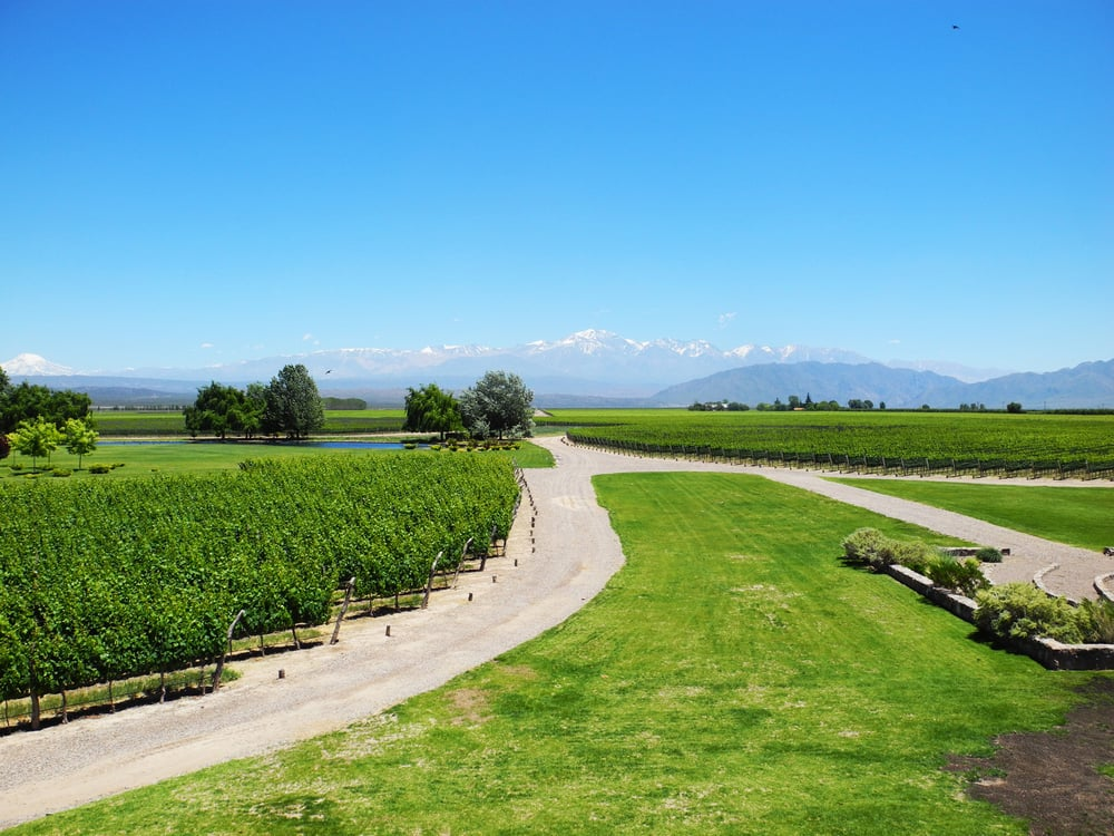 WANT TO LEARN ABOUT MENDOZA VINEYARD?     ARGENTINA EXPERTISE