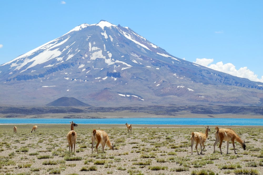 wine-TROTTERS_wine-tourism-agency_tour_trekking_hiking_Andes_65_Andes_74.jpg