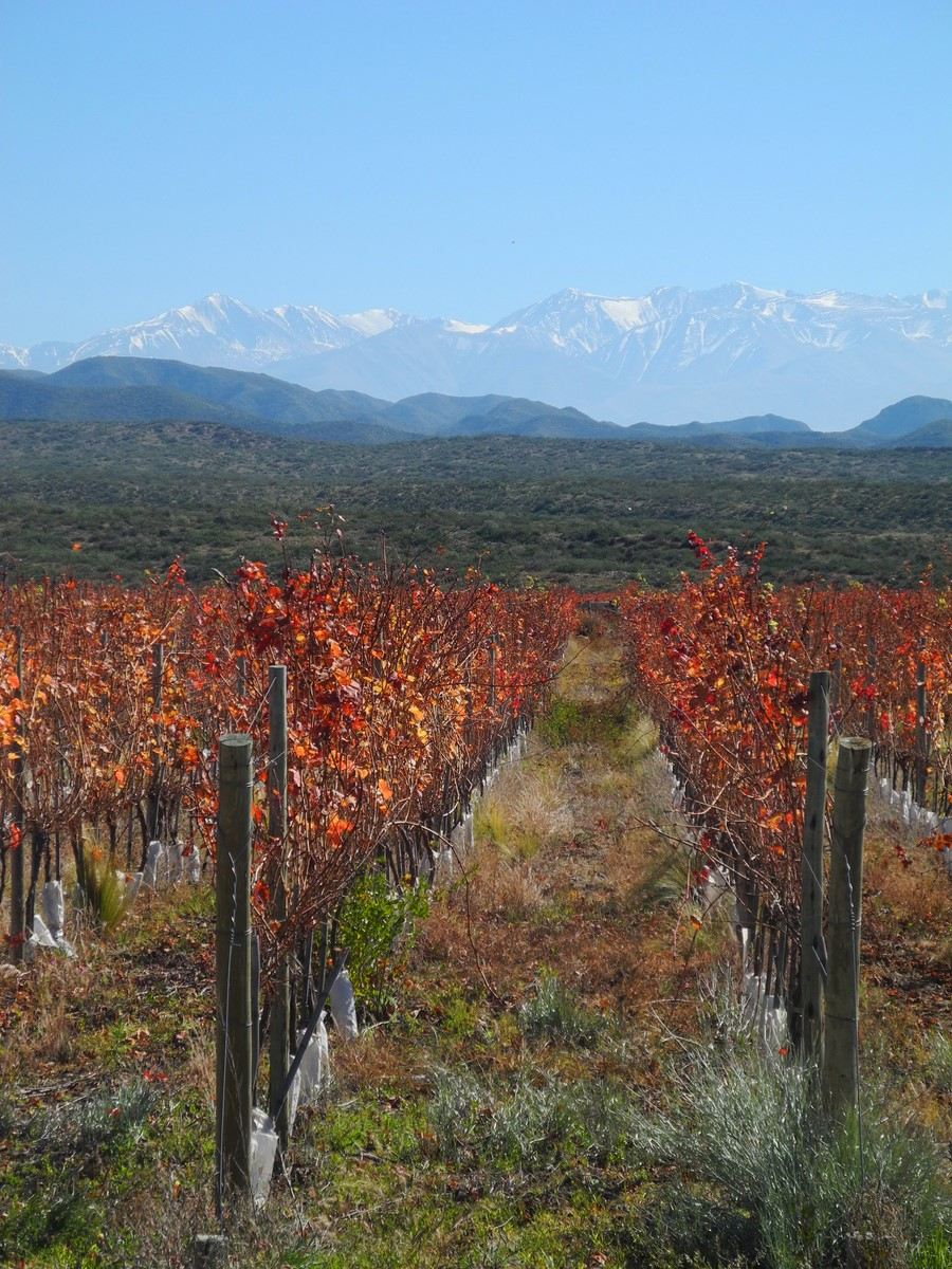 wine-TROTTERS_wine-tourism-agency_tour_wineries_vineyards_gastronomy_passion_Andes_35.jpg