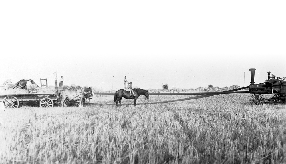 Henery-Bose_Field_Harvest.jpg