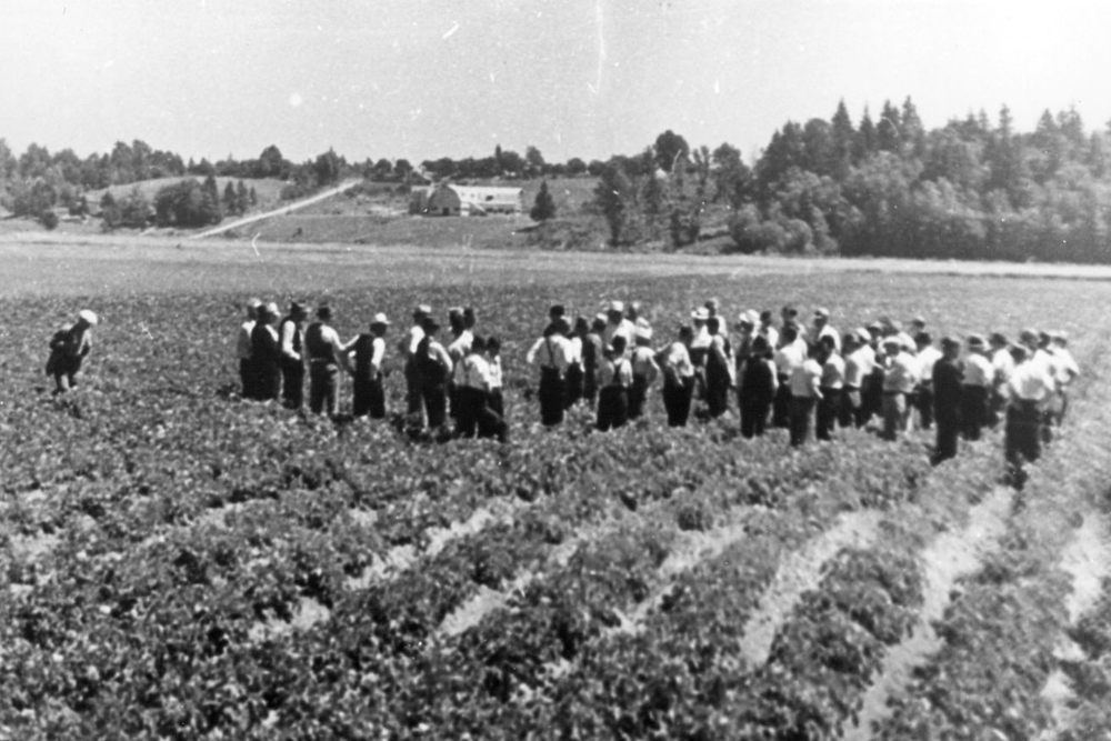 Bose_Field_Harvest.jpg