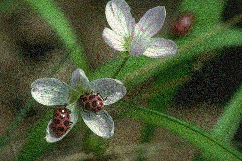 Ladybugs Before