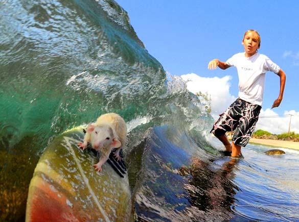 international surfing day clark little surfing friends surf lessons