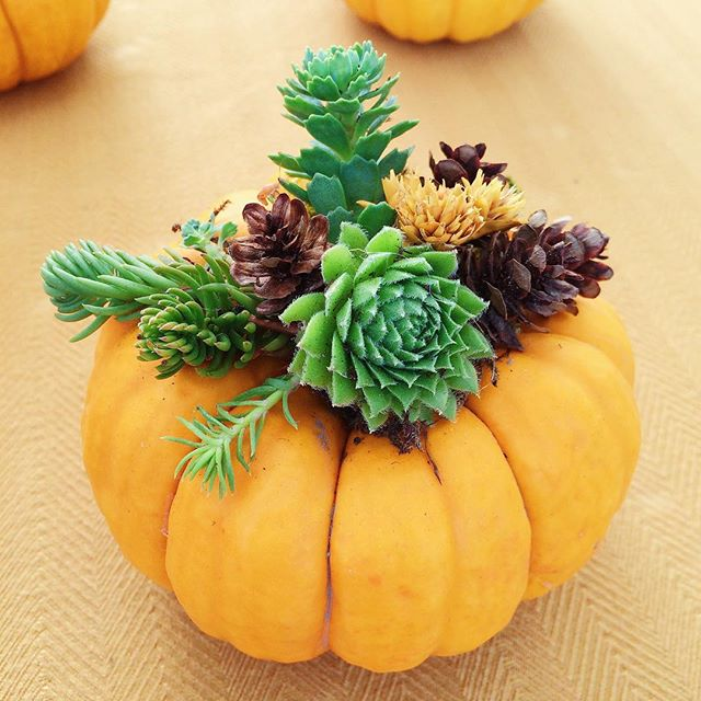 Pumpkculent. Pumpkins and succulents. I love the textures #succulentplanter #farmersmarketfinds #plantsofinstagram