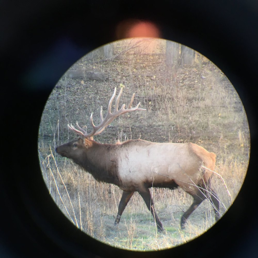 Elk through a telescope. Also a good band name.