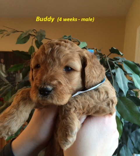 Buddy - 4 weeks.jpg