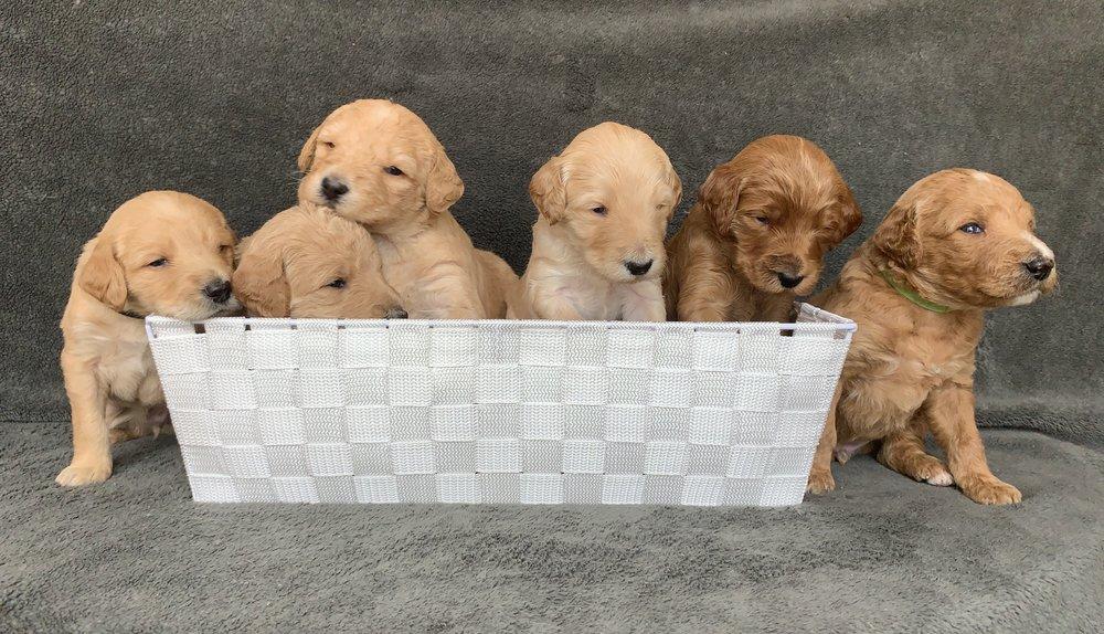 Red pups.jpeg