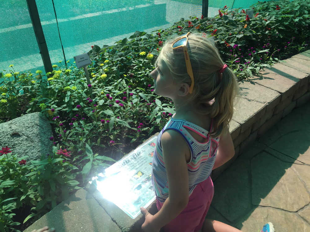 My niece using the guide to identify butterflies in the Butterfly House at Geneva Park District's Peck Farm Park.