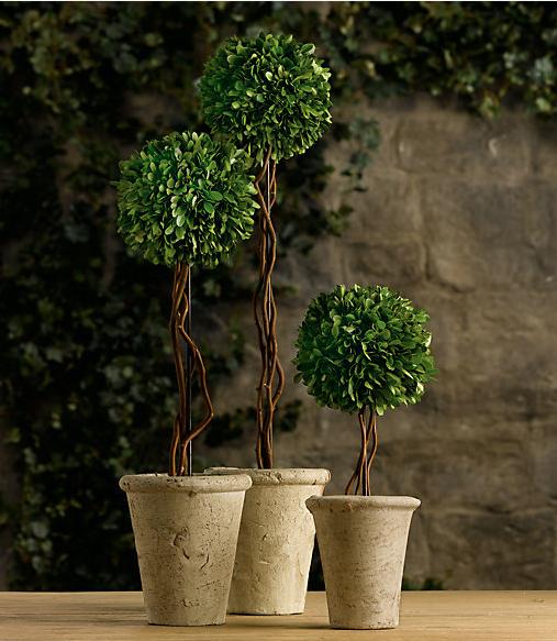 Topiaries | Sarah Barksdale Design