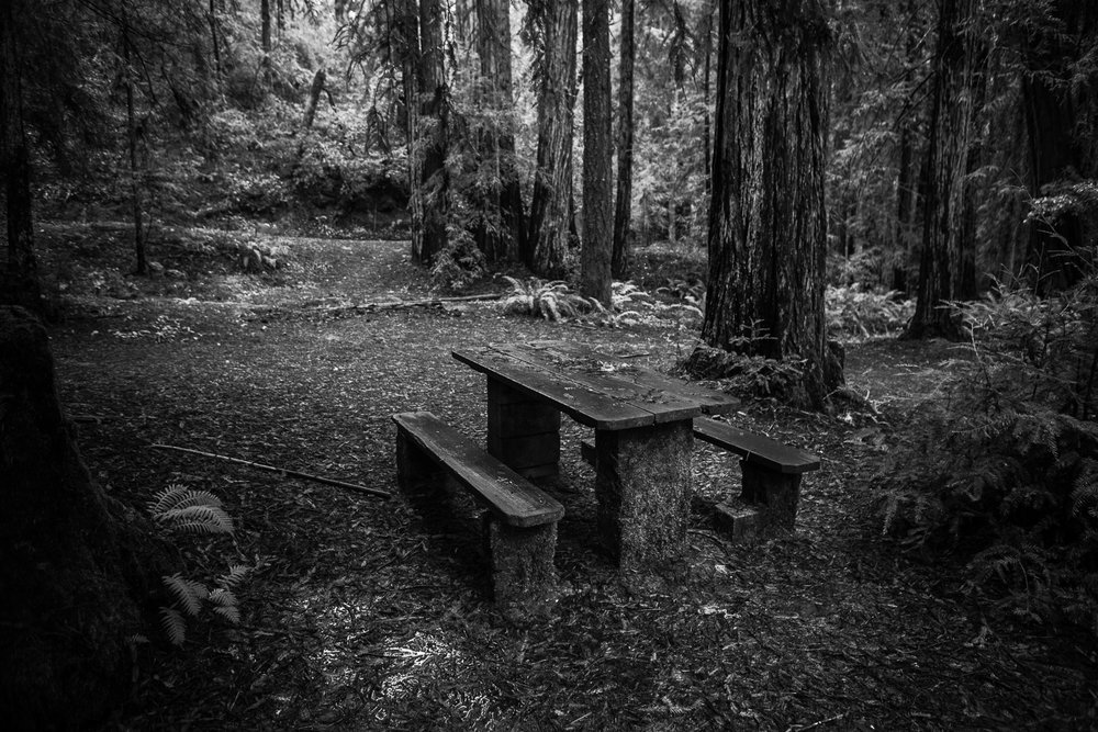 A Faulkner Park bench slowly becoming part of the forest.