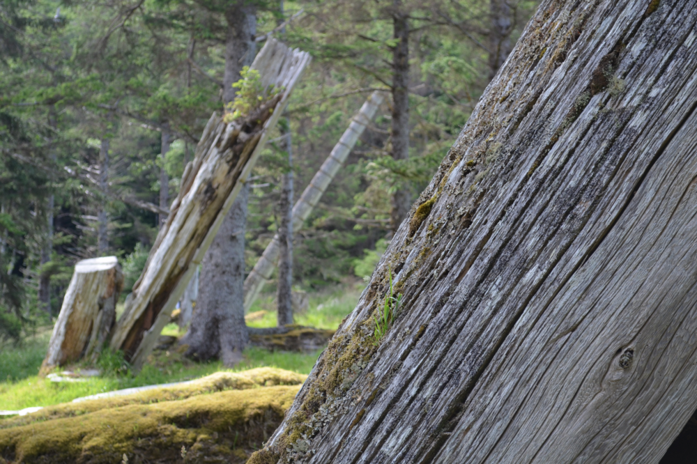 Why Haida Gwall? 10 spectacular reasons to visit + a deeper reflection.