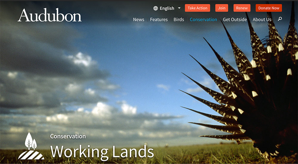 "On the Audubon website, note how ""Conservation"" is highlighted blue in the navigation when the user is on a page in that section, such as the ""Working Lands"" page."