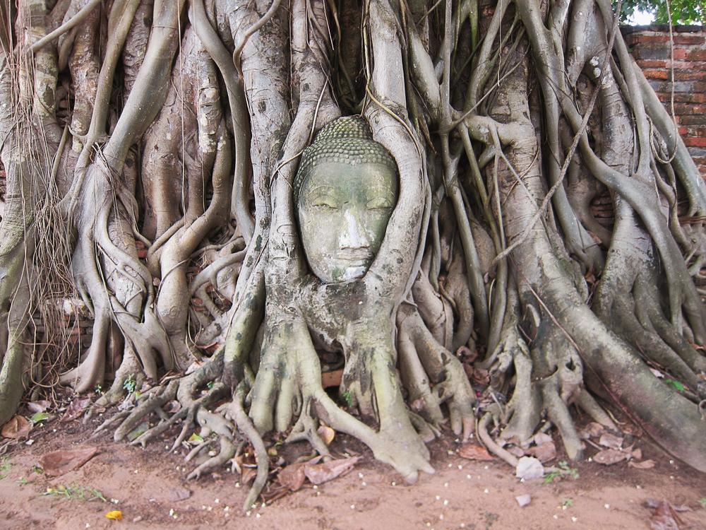 Buddha - Ayutthaya, Thailand