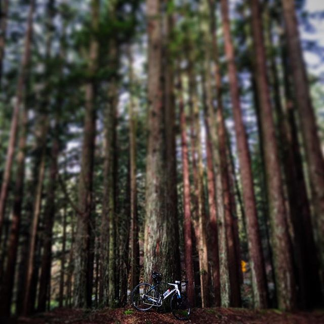 Big trees. #gianttcx