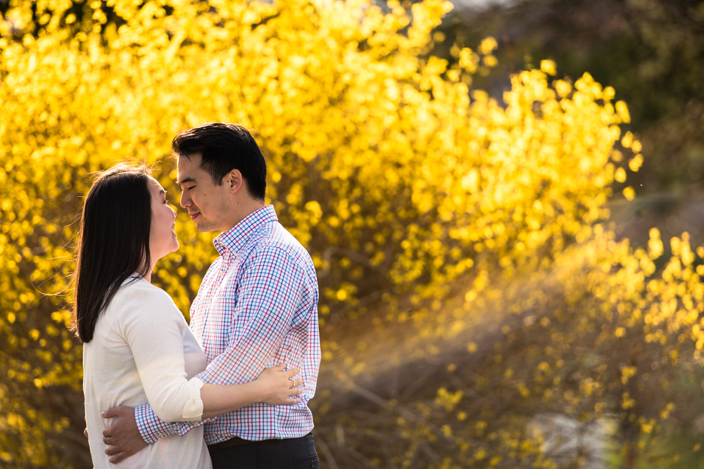 The day of our photo session the yellow Forsythia bushes bloomed. Just in time for our Spring engagement session!