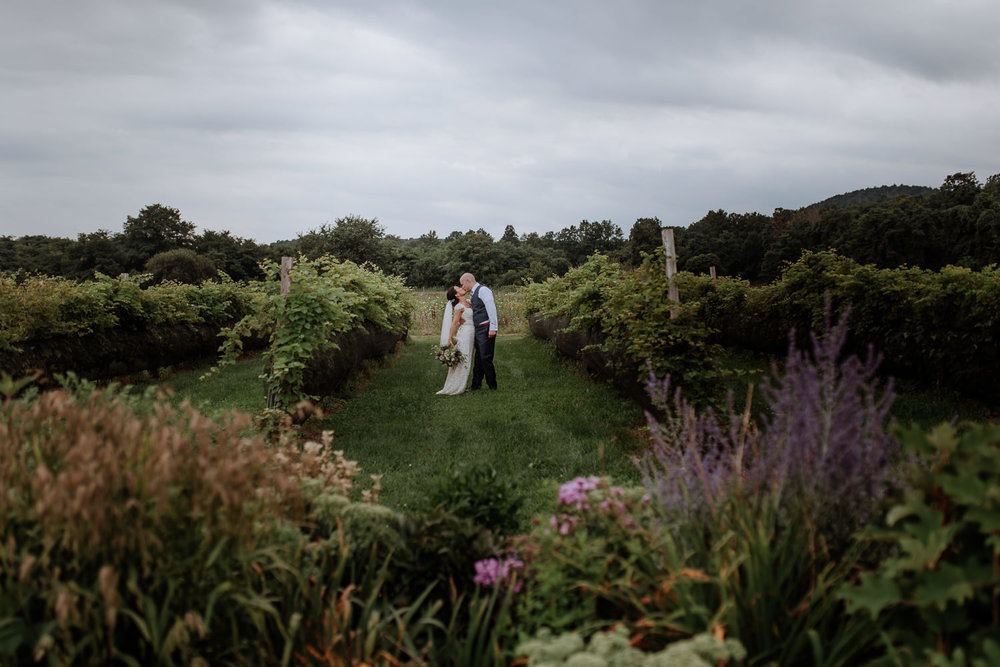 bride and groom kiss in vineyard in new york