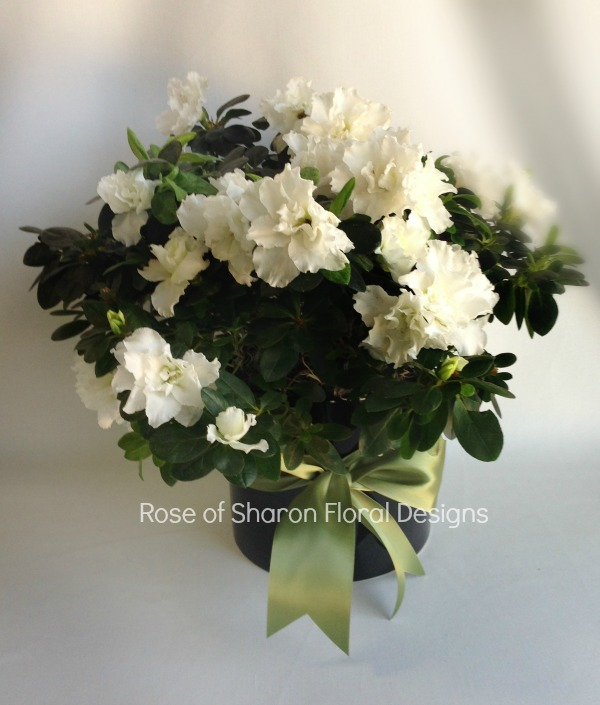 White Azalea, Rose of Sharon Floral Designs