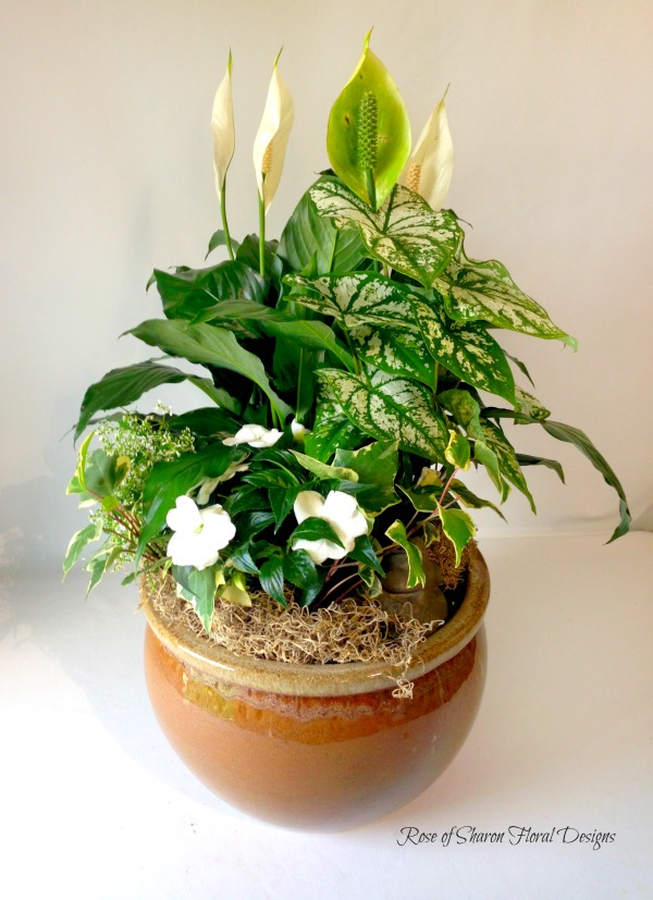 Mixed Planter with a Peace Lily, Rose of Sharon Floral Designs