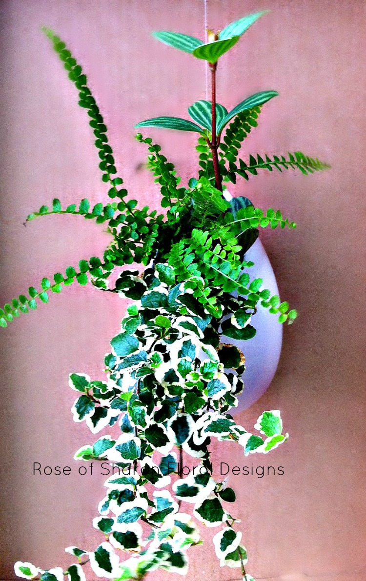 Mixed Foliage Planter, Rose of Sharon Floral Designs