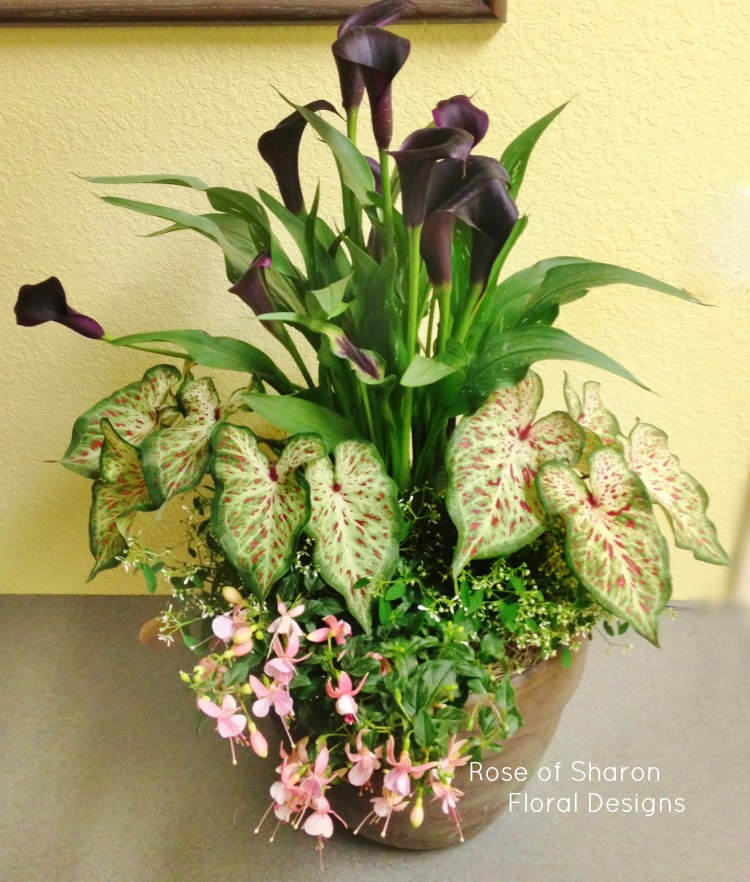 Mixed Planter with Calla Lilies, Rose of Sharon Floral Designs