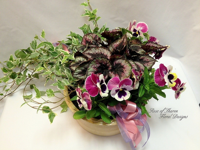Mixed Planter with Pansies, Rose of Sharon Floral Designs