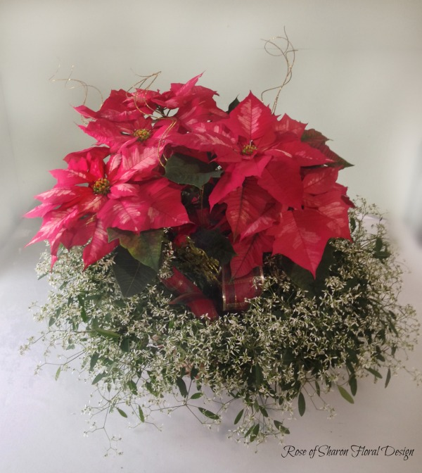 Poinsettia Planter, Rose of Sharon Floral Designs