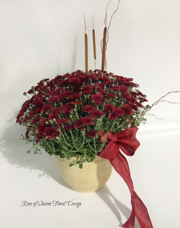 Potted Button Mum Plant with Cattails, Rose of Sharon Floral Designs
