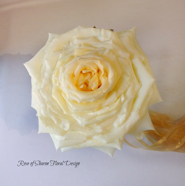 White Composite Rose. Rose of Sharon Floral Designs