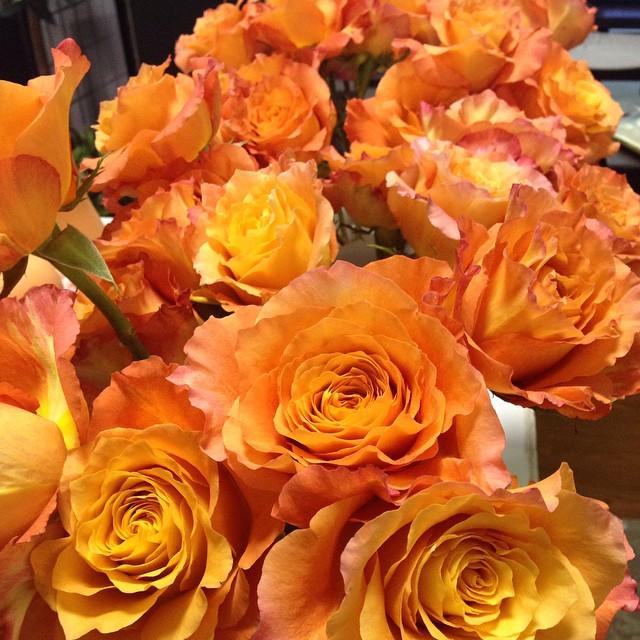 'Free Spirit' roses
